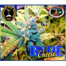 Blue Cheese 5 stk Feminized