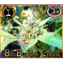 Big Buddha Cheese 5 stk Feminized