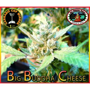 Big Buddha Cheese 10 stk Feminized