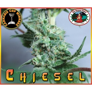 Chiesel 10 stk Feminized