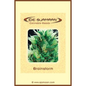 Brainstorm – 12 stk Regular
