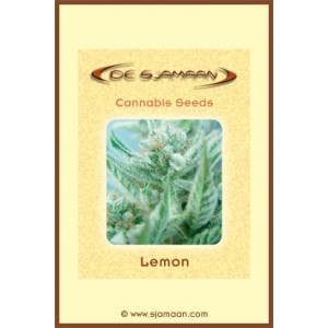 Lemon – 12 stk Regular