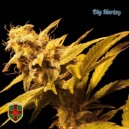 Big Marley - 5 stk. Feminized