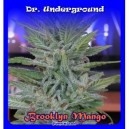 Brooklyn Mango - 8 stk. Feminized