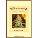 White Widow ® – 12 stk Regular