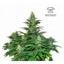 Dark Delight - 5 stk Feminized