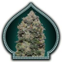 Northern Lights - Skunk frø - 5 stk feminized